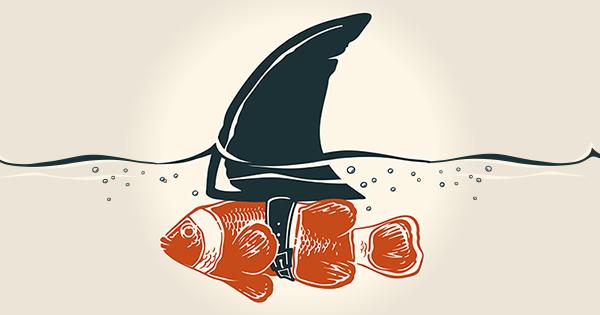 Clownfish-Shark-Fin-KCM.jpg